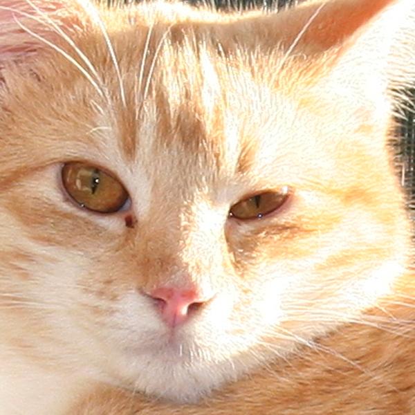 Mucus On Cat Eye