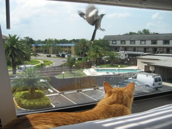 Mocking bird finds Bad Cat Chris