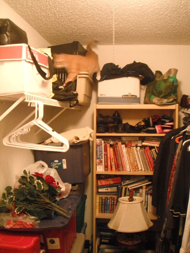 Bad Cat Chris on shelf in closet