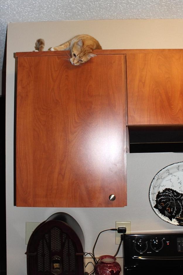 Chris on kitchen babinet
