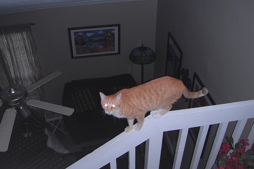 Bad Cat Chris on railing