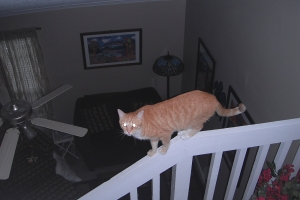 Bad Cat Chris on railing