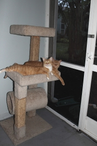 Chris and Tigger enjoying the patio