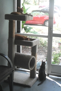 Cat Perch on patio