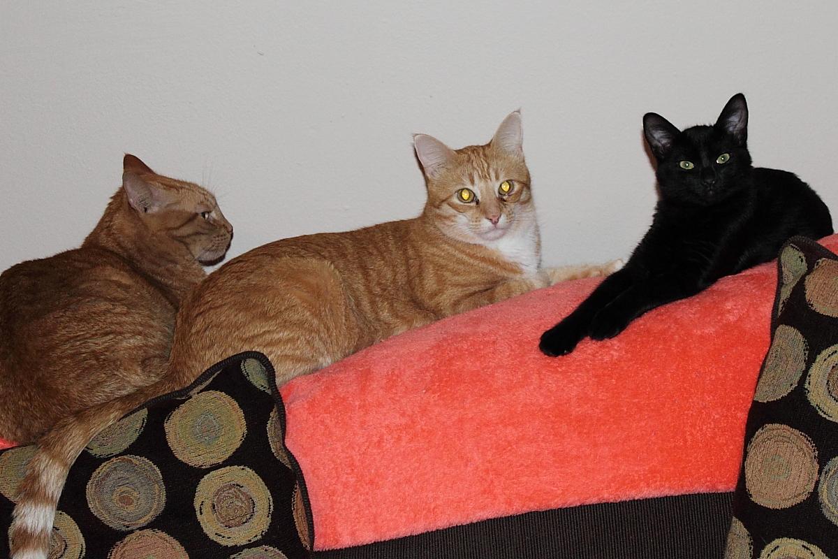 Tigger, Chris and Puck