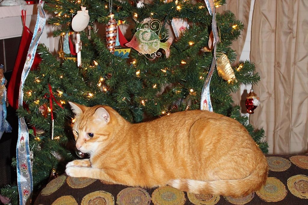 Chris at Christmas