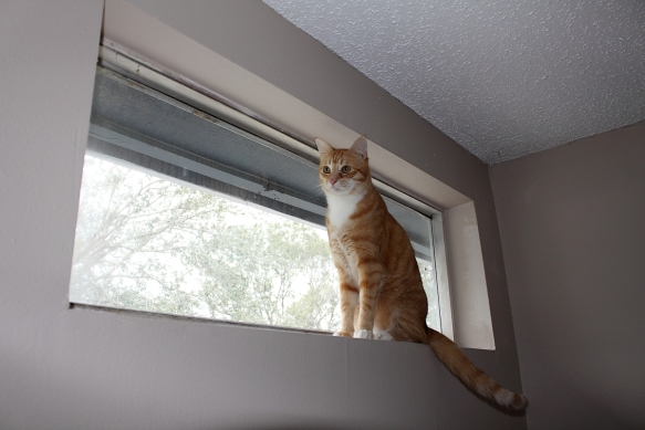 Chris in Window