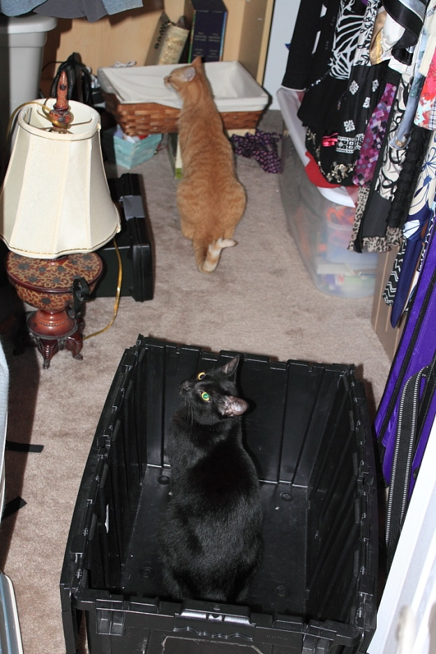 Puck and Chris investigating closet