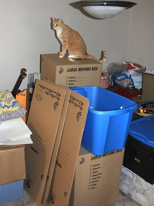 d Cat Chris on top of boxes