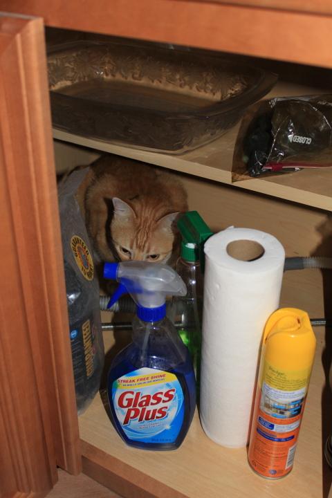 Chris in kitchen cabinet