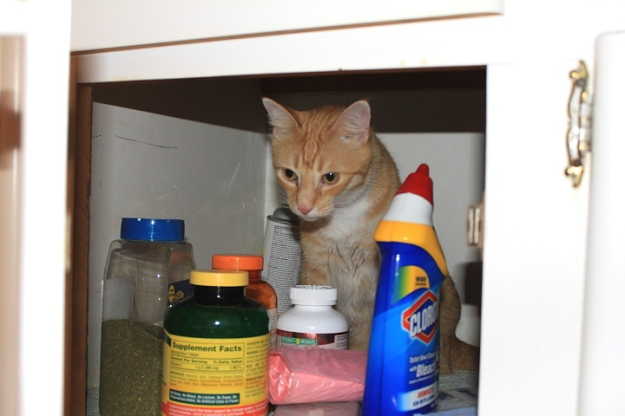 Bad Cat Chris under bathroom sink