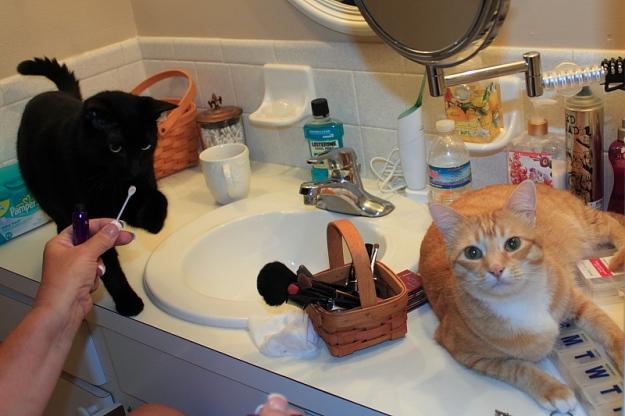 Bad Cat Chris on bathroom counter.