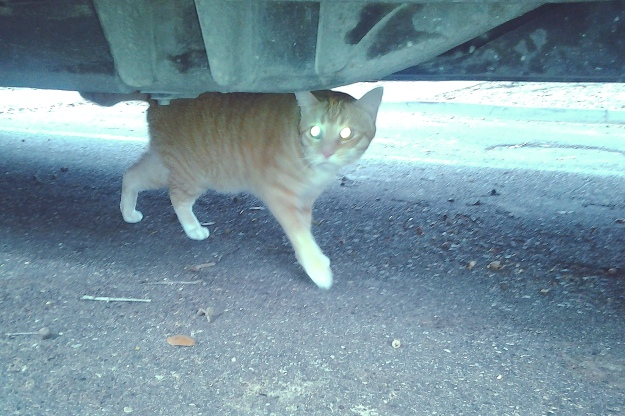 Bad Cat Chris under car