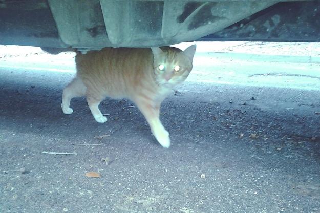 Bad Cat Chris under car