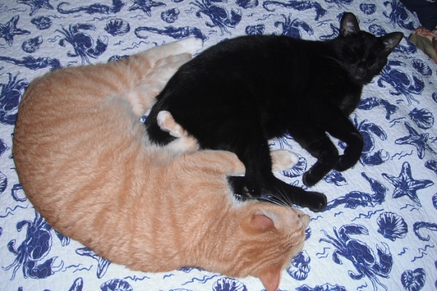 Our cats, Chris and Puck, napping together