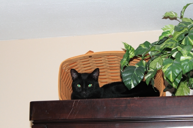 Our cat Puck on china cabinet