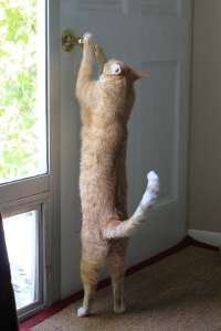 Bad Cat Chris trying to open door