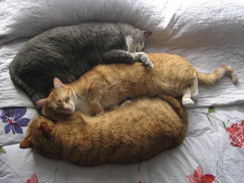 Bad Cat Chris, Abbey and Tigger