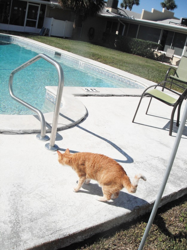 Bad Cat Chris outside by pool
