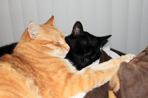 Bad Cat Chris and Puck