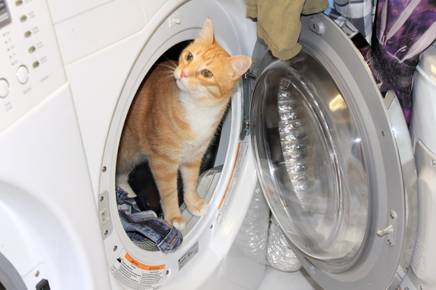 Bad Cat Chris in dryer