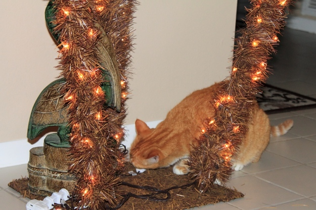 Bad cat Chris chewing on Christmas tree cord