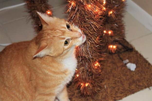 Bad cat Chris chewing on Christmas tree light