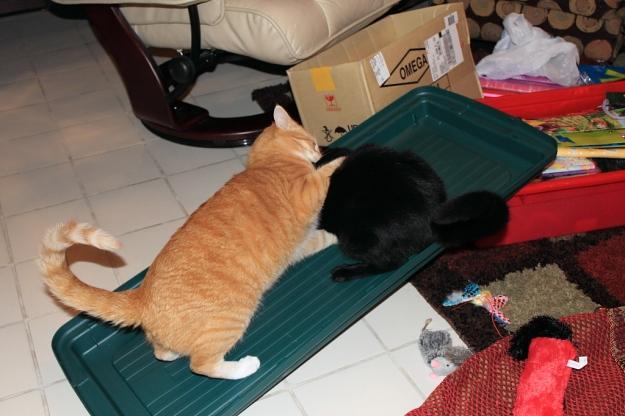 Bad Cat Chris attacks Puck