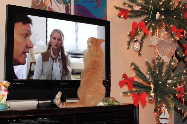 Bad Cat Chris watching TV