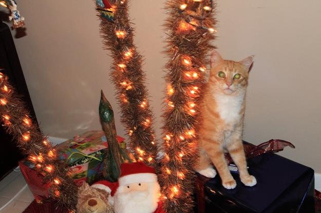 Bad Cat Chris sitting on present