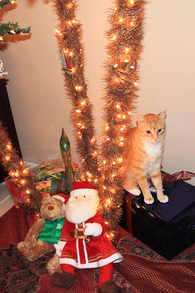 Bad Cat Chris on present