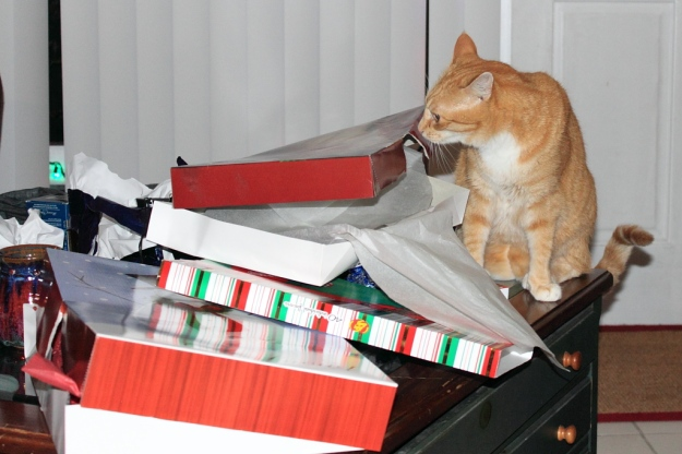Bad Cat Chris after opening Christmas Presents