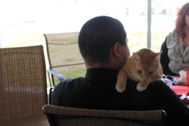 Bad Cat Chris and Chris