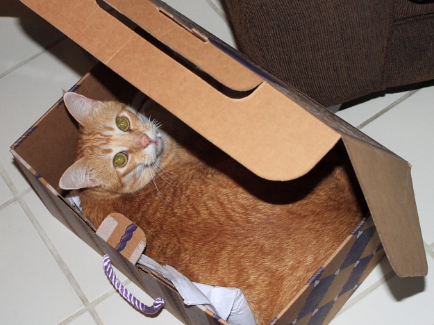 Bad Cat Chris in a box