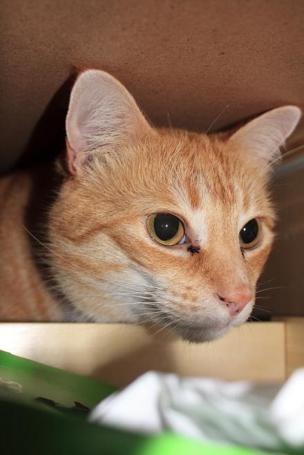 Bad Cat Chris behind drawer