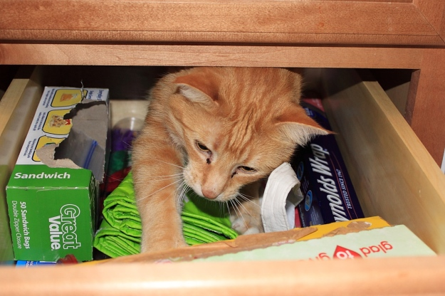 Bad Cat Chris behind drawer