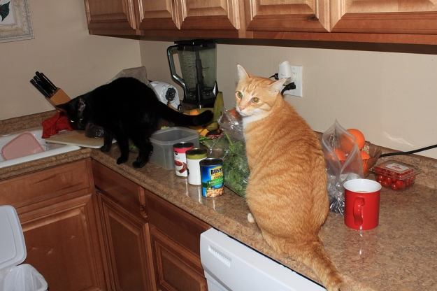 Our cats Chris and Puck on kitchen counter.