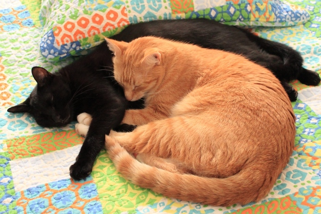 Our cats Chris and Puck napping.