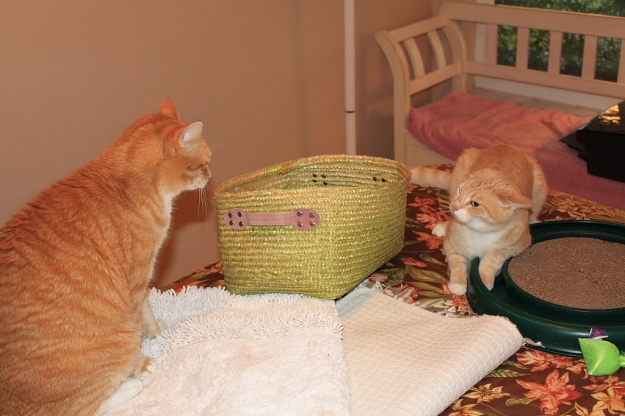 Chris interupts Our cat Frankie playing with Turbo Scratcher