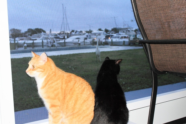 Our cats Chris and Puck watching egret.
