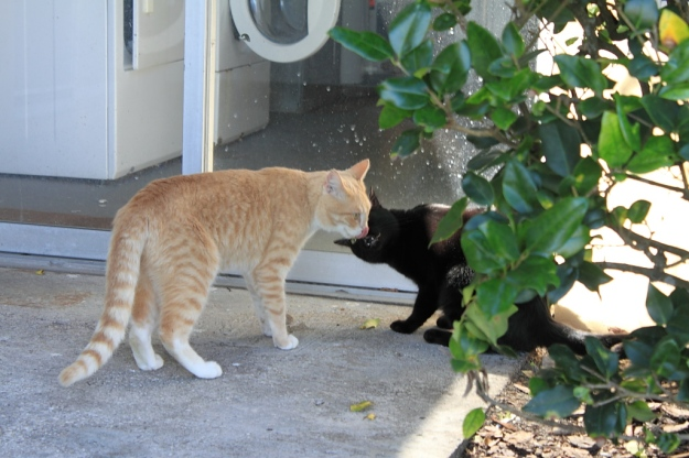 Our cats Frankie and Puck Outside.