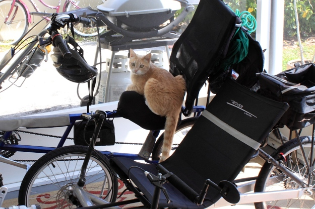 Our cat Frankie on bike