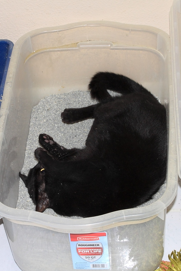 Puck rolling in litter box
