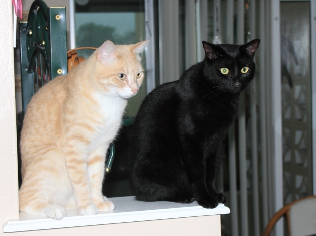 Our cats Frankie and Puck