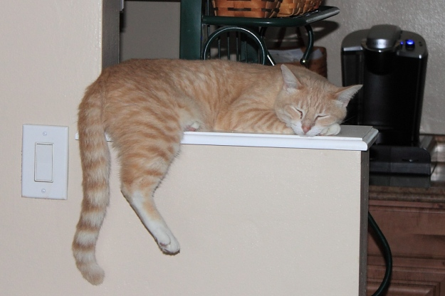 Our cat Frankie on ledge