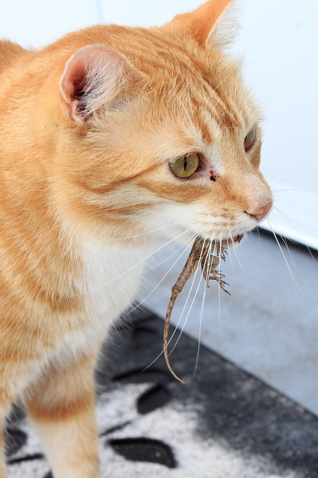 Bad Cat Chris with lizard.