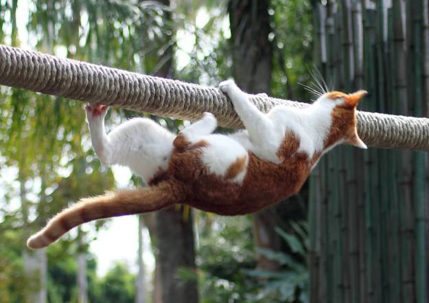 Cat hanging from rope