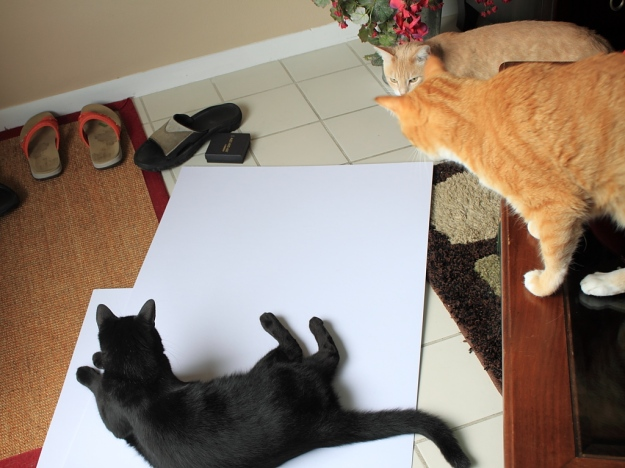 Cats interfering with photo shoot