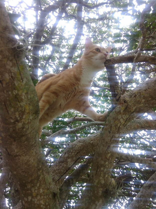 Bad Cat Chris in a tree.