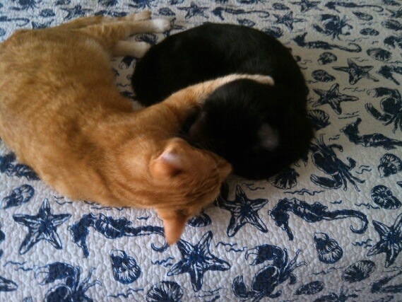 Our cats Chris and Puck napping together.